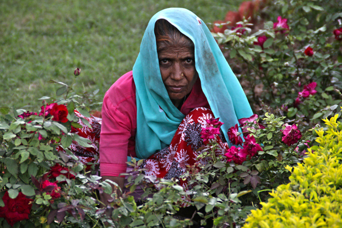 Viejas flores (Udaipur, 2014)